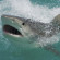 65-year-old ski surfer attacked by shark in Australia