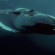 52, the loneliest whale in the world: All you should know about the whale