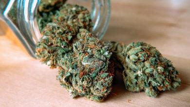 Cannabis export Kerala