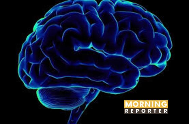 human brain (1)