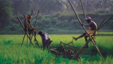 Kerala farmer welfare board